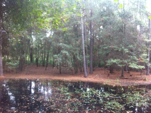 One of many interesting water sites at Flatwoods, Tampa on the bike trails.