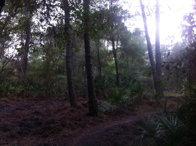Typical trail for off road biking at Flatwoods, Tampa.