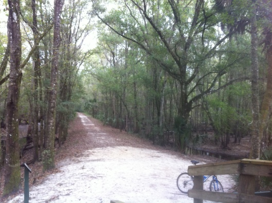 This trail led to the Hillsborough River where there was a gazebo for resting and great bird watching.  Most of the trails were no more than a bike tire wide, but this was the exception.