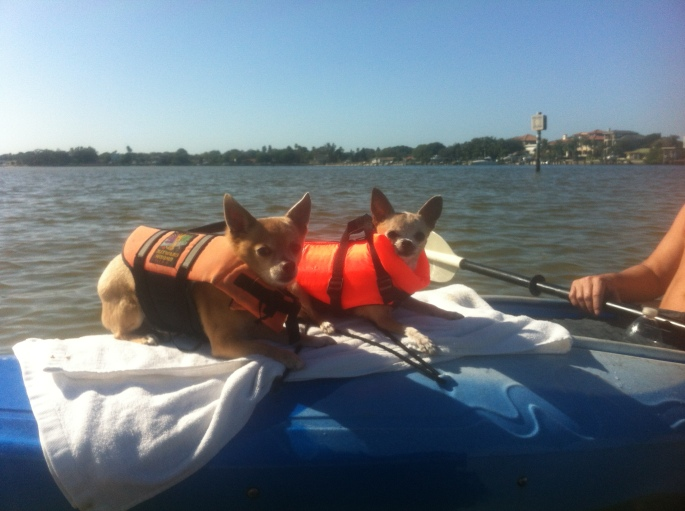 Even our dogs go into a day of kayaking at Weedon Island, St. Petersburg.