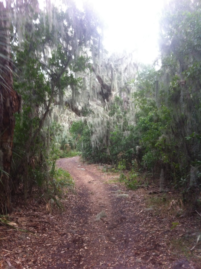 Some of the trails were a bit more challenging at Boyd Hill.  But even the more challenging were fairly easy and this park is great for beginners or just having a relaxing bike trail of a day.