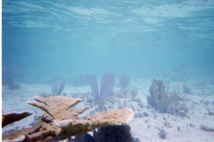 Underwater shot of a fairly shallow bit showing some interesting coral and plant life, off Corona Beach, Cozumel, Mexico.