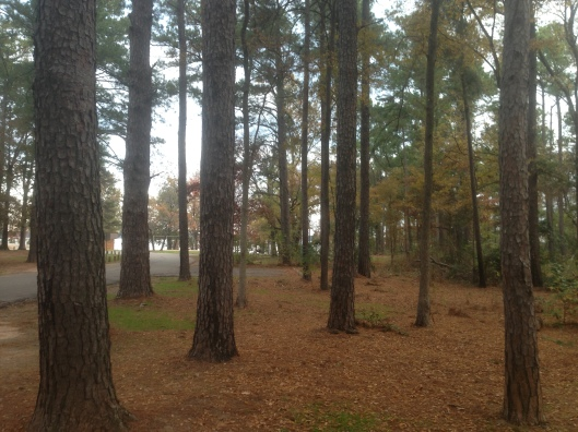 The campground was woody and the sites had plenty of distance between them at Atlanta State Park in Texas.