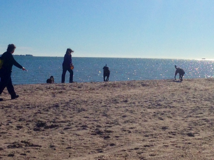Dog Beach at Fort Desoto Park, St. Petersburg, Florida