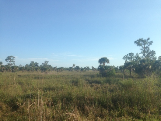 The views of the Everglades are stunning from the Trail Lakes Campground in Ochopee, Florida.
