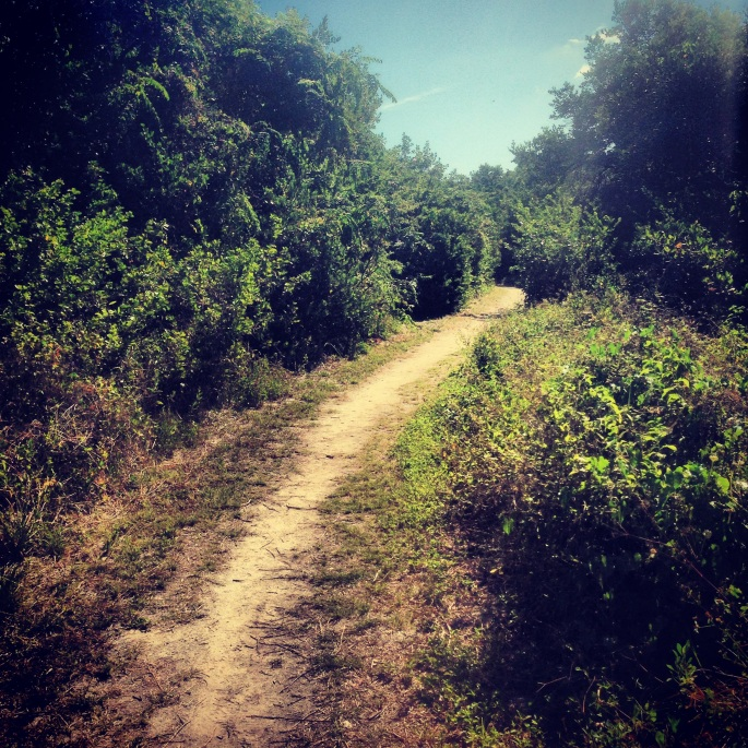 This nature trail takes you right by the ocean and is a pleasant walk at the Long Key State Park, Layton, Florida.