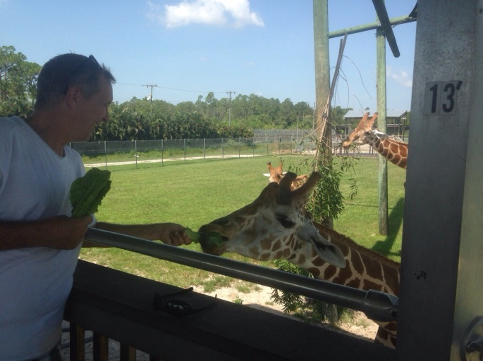 Here's me feeding a giraffe at Lion Country Safari.  Truly a memorable experience.