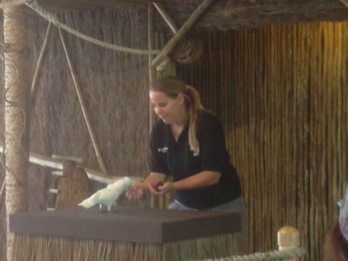 Terrific staff provide great commentary during various shows educating the public about the various animals.