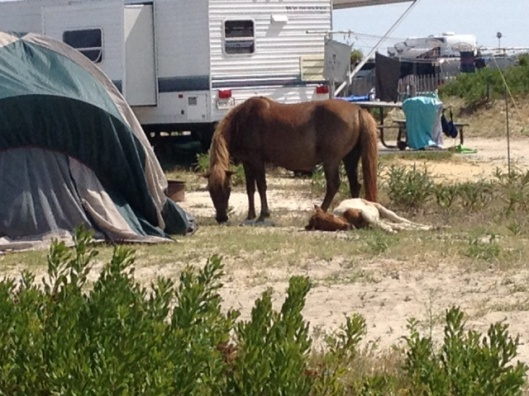 Camping with wild horses and ponies means you can't leave a lot sitting around your campsite that they can get into.