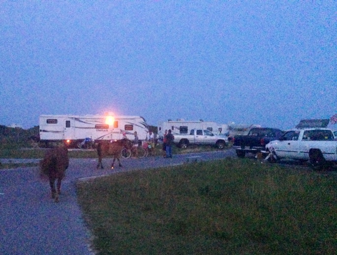 Horses roaming freely with the campers at Assateague.