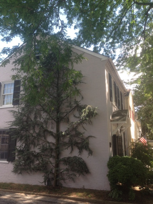 I thought this tree on the side of a house was so interesting at Kennett Square, PA.