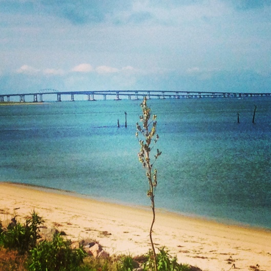 At the scenic overlook you get a great view of the beach and the bridge.