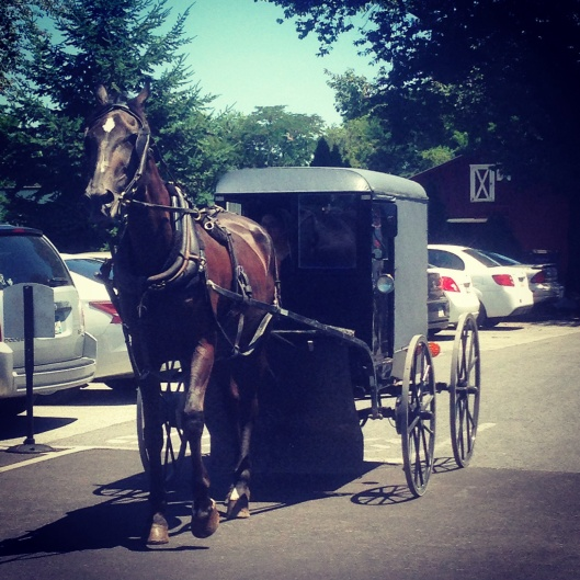 You will see Amish buggy's along the streets of Intercourse PA.