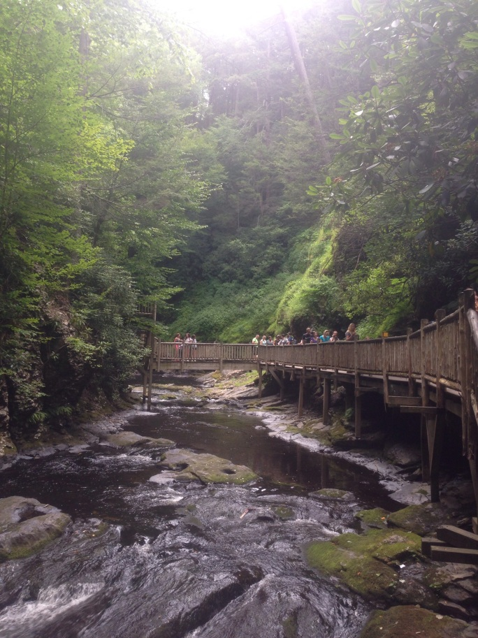There are a lot of paths along the water at Bushkill Falls and so much beauty to soak up.