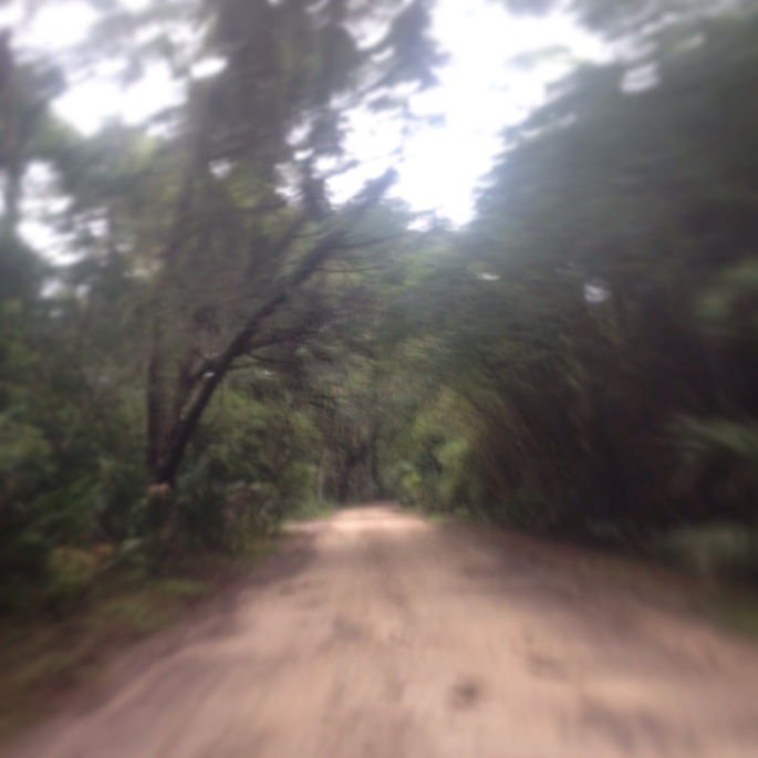 The road into Kingsley Plantation is very special indeed and gives you the impression immediately that you are going back in time to Kingsley Plantation.